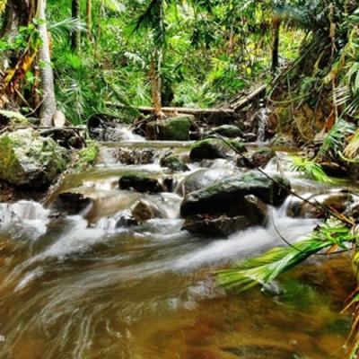 昆士兰热带雨林